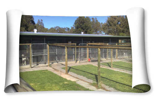 Dog Kennels In Perth Area